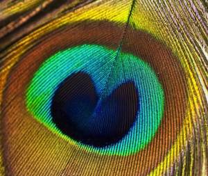 Nature-Symmetry-4